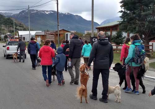 caminata-perros-imagen-1