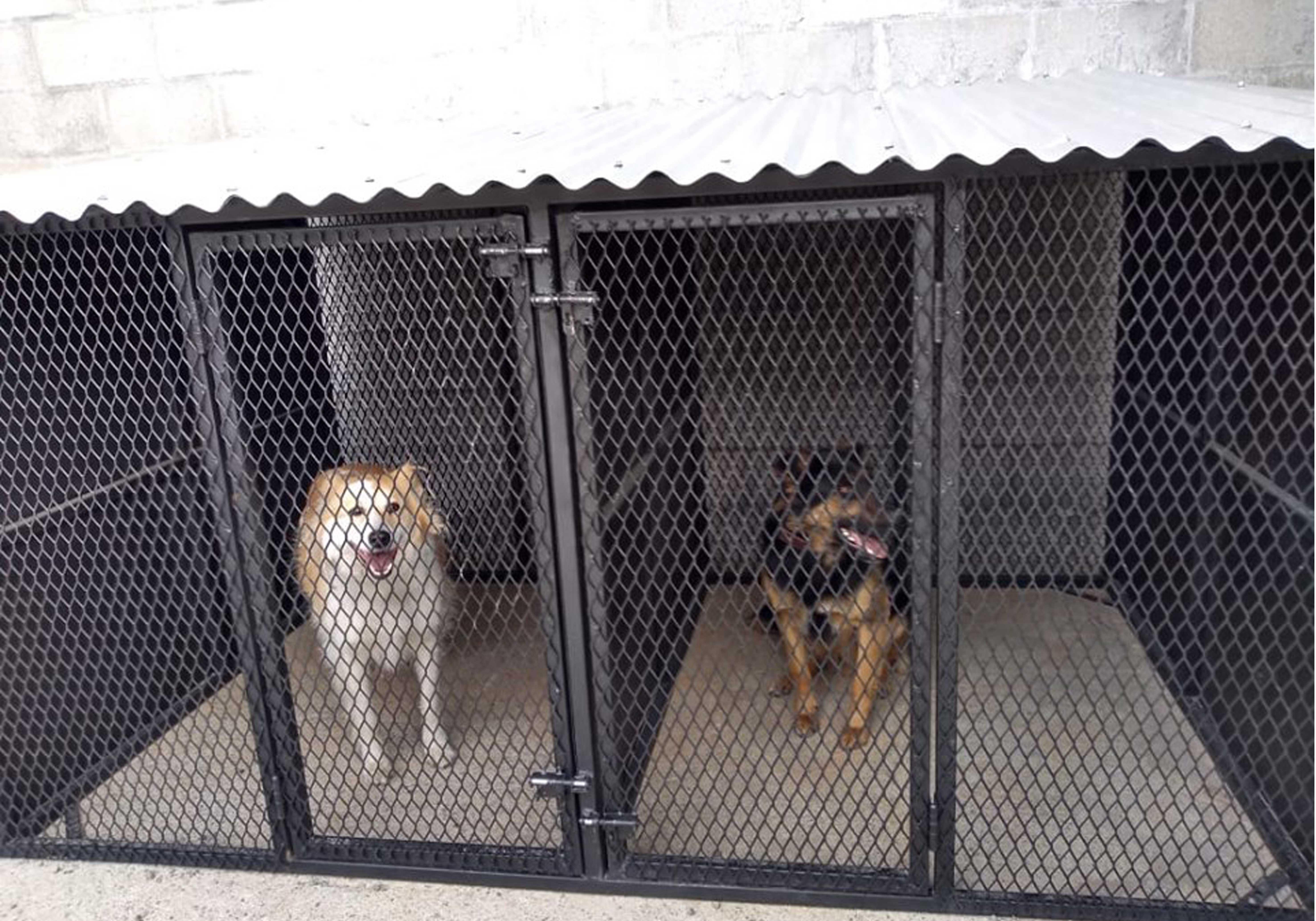 perros-imagen-3